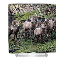 Bighorn Reunion Shower Curtain