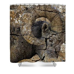 Bighorn Rock Art Shower Curtain