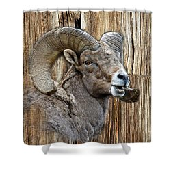 Bighorn Sheep Barnwood Shower Curtain