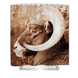 Bighorn Sheep Profile Shower Curtain by Ramona Johnston