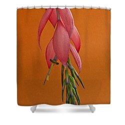Bilbergia  Windii Blossom Shower Curtain by Heiko Koehrer-Wagner