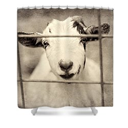 Billy G Shower Curtain by Amy Tyler