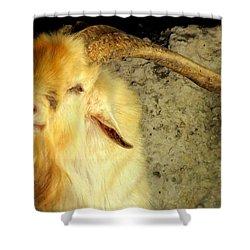 Billy Goat Gruff Shower Curtain by Karen Wiles