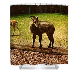 Billy Goat Keeping Lookout Shower Curtain by Amazing Photographs AKA Christian Wilson