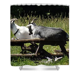 Billy Goats Picnic Shower Curtain