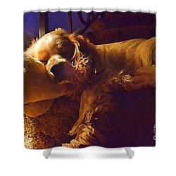 Bingos Nap Photoart Shower Curtain by Debbie Portwood