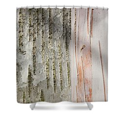 Birch Bark 11 Shower Curtain by Mary Bedy
