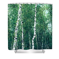 Birch Forest - Green Shower Curtain by Hannes Cmarits