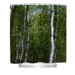 Birch Forest In The Summer Shower Curtain by Hannes Cmarits