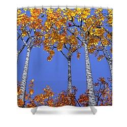 Birch Grove Shower Curtain by Cynthia Decker