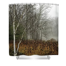 Birch In Winter Shower Curtain