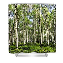 Birch Tree Grove In Summer Shower Curtain by Randall Nyhof