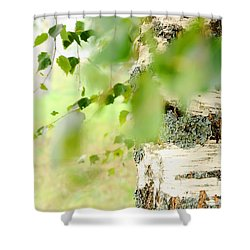 Birch Tree. The Soul Of Russian Nature Shower Curtain by Jenny Rainbow