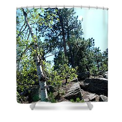 Shower Curtain featuring the photograph Birch Trees by Dany Lison