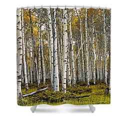 Aspen Trees In Autumn Shower Curtain