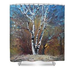 Birch Trees Shower Curtain by Ylli Haruni