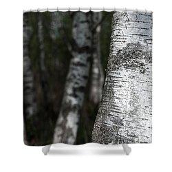 birches II Shower Curtain by Hannes Cmarits