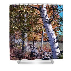 Shower Curtain featuring the photograph Birches by Mim White