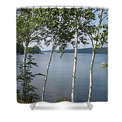 Birches On Sunapee Shower Curtain