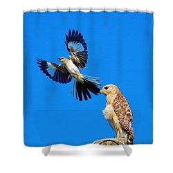 Bird Alert Shower Curtain