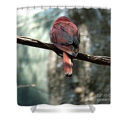 Bird Shower Curtain by Andrea Anderegg