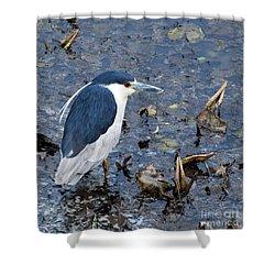Bird - Black Crowned Night Heron Shower Curtain by Paul Ward