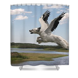 Bird Dog Shower Curtain by Rick Mosher