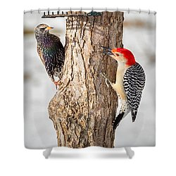 Bird Feeder Stand Off Shower Curtain