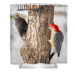 Bird Feeder Stand Off Square Shower Curtain