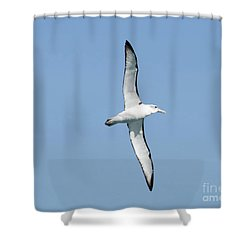 Arbornos Flying In New Zealand Shower Curtain