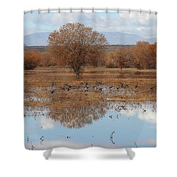 Shower Curtain featuring the photograph Bird Heaven by Ruth Jolly