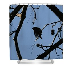 Shower Curtain featuring the photograph Bird In Flight by Tara Potts
