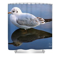 Bird Reflections Shower Curtain