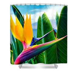 Bird Of Paradise 5 Shower Curtain