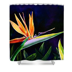 Bird Of Paradise Shower Curtain by AnnaJo Vahle