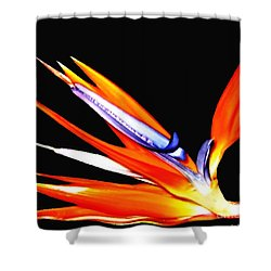 Shower Curtain featuring the photograph Bird Of Paradise Flower With Oil Painting Effect by Rose Santuci-Sofranko