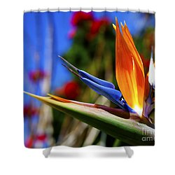 Shower Curtain featuring the photograph Bird Of Paradise Open For All To See by Jerry Cowart