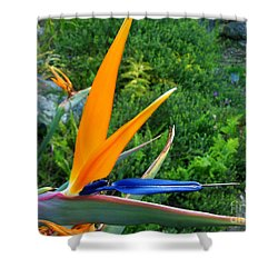 Shower Curtain featuring the photograph Bird Of Paradise by Mini Arora