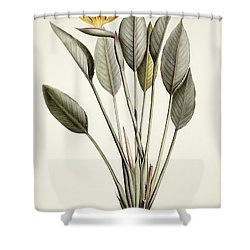 Bird Of Paradise Shower Curtain by Pierre Joseph Redoute