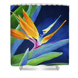 Bird Of Paradise Shower Curtain by Stephen Anderson
