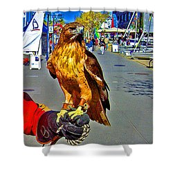 Bird Of Prey At Boat Show 2013 Shower Curtain by Joseph Coulombe