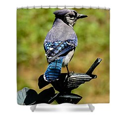 Bird On A Bird Shower Curtain