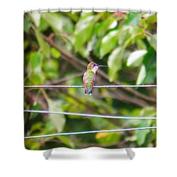 Shower Curtain featuring the photograph Bird On A Wire by Nick Kirby