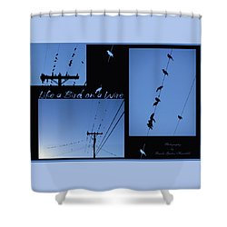 Shower Curtain featuring the photograph Bird On A Wire Photo Collage by Brooks Garten Hauschild