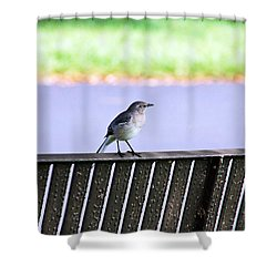 Bird On Bench Shower Curtain by Aimee L Maher Photography and Art Visit ALMGallerydotcom