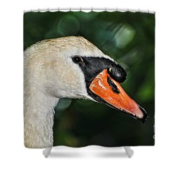 Bird - Swan - Mute Swan Close Up Shower Curtain by Paul Ward