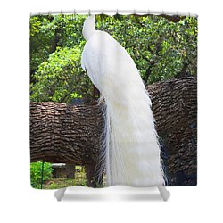Bird - White Peacock Pose- Luther Fine Art Shower Curtain