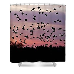 Shower Curtain featuring the photograph Birds At Sunrise by Aimee L Maher Photography and Art Visit ALMGallerydotcom