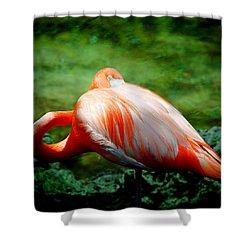 Bird's Eye View Shower Curtain by Beverly Stapleton