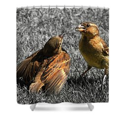 Shower Curtain featuring the photograph Birds In Love by Kristine Merc